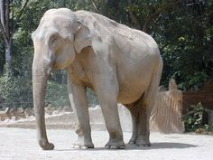 Other than the cat, my favorite creature. Elephas Maximus, Albino, Games For Kids, Sri Lanka, Elephant, Creatures, Fantasy, Cats, Animals
