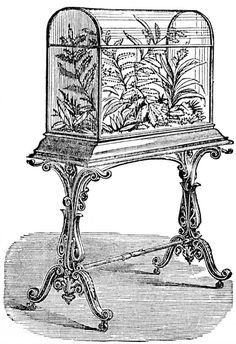 More on Victorian houseplants.  Wardian case shown.
