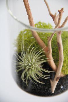 Hanging Tillandsia Terrarium