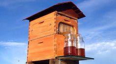 Honey on tap - the story behind a revolution in beekeeping
