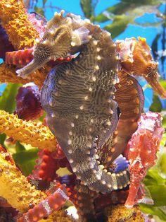 Under sea life Unique hippocampus seahorse Underwater Creatures, Underwater Life, Ocean Creatures, Beautiful Sea Creatures, Animals Beautiful, Poisson Mandarin, Fauna Marina, Life Under The Sea, Beneath The Sea