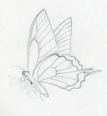 butterfly sketch side drawing monarch flying right easy draw pencil drawings artwork discover