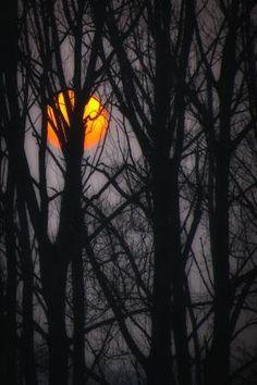 Beautiful Harvest Moon hiding behind the trees! So beautiful!!