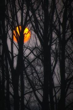 Beautiful Harvest Moon hiding behind the trees! So beautiful!!