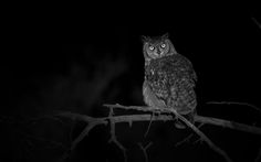 Photo The Night's Watch. by Anubhav Vanamamalai on 500px