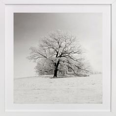 """""""Frozen in Time"""" by Robin Ott in beautiful frame options and a variety of sizes. #Minted"""