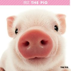 Introducing Artlist Collection animal calendars such as THE PIG, THE RABBIT, THE…