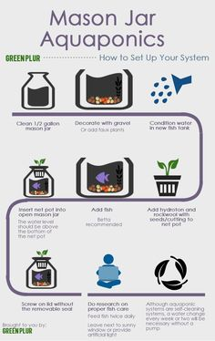 Here is a step-by-step instructional infographic on how to set up your Mason Jar Aquaponics system. Some things to keep in mind: A water change every week or two may be necessary as this is a simpl. Aquaponics System, Aquaponics Diy, Hydroponic Gardening, Organic Gardening, Aquaponics Greenhouse, Indoor Gardening, Aquaponics Supplies, Indoor Pond, Hydroponic Growing