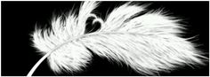 Feather, Facebook timeline cover photo