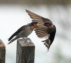 Angry birds. Ha.