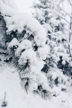Winter Wonderland - Oslo, Norway in the snow | Field and Nest