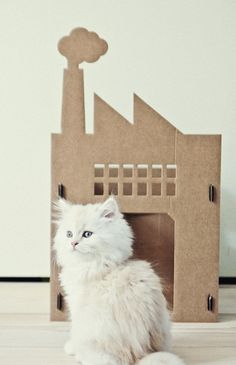 Kattenpandje