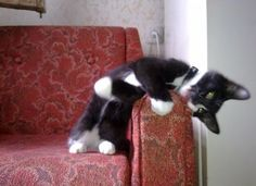 """""""Do not attempt to teach your cat tricks--they already know every trick there is."""" --Sidra Malik"""