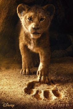 For Everyone Who Thought Disney's Lion King Remake Was Going to Be Live-Action . For Everyone Who Thought Disney's Lion King Remake Was Going to Be Live-Action . Art Roi Lion, Lion King Art, Lion King Movie, Disney Lion King, Lion King Simba, Lion King Quotes, Lion King Remake, Lion King Images, Lion King Pictures