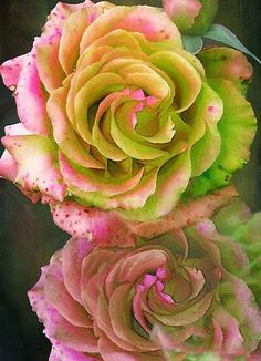 "Roses ✮✮""Feel free to share on Pinterest"" ♥ღ www.fashionupdates.net"