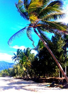 Thala beach Port Douglas Thala beach resort www.greengetawaysaustralia.com.au Jacques Yves Cousteau, Tropical Paradise, Nature Reserve, Beach Resorts, Exotic, Fair Grounds, Green, Travel, Viajes