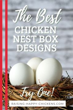 Which chicken nest box design will best suit your flock? Nest boxes are a critical part of any chicken coop. But what should they be made of, and what's the best model? Here are 6 steps for designing the best chicken box for your happy flock. Backyard Coop, Backyard Chicken Coops, Backyard Farming, Backyard Chickens, Raising Meat Chickens, Fancy Chickens, Best Nest Box, Fancy Chicken Coop, Chicken Boxes