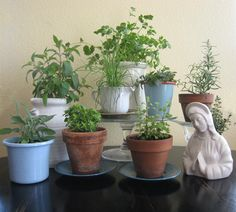 Plant pots made from thrift store crockery (with a hole drilled into the bottoms)