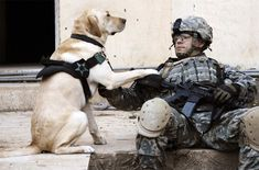 a soldier and his dog in iraq. Did you know they have only recently been aloud to bring them home! Usually left.