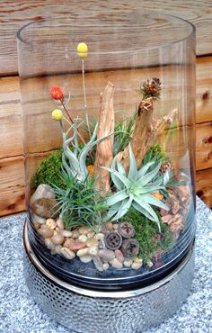 Large Low Maintenance Easy Care Air Plant Terrarium - A Unique Wedding or Mothers Day Gift