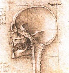 Da Vinci sketch of a skull dissection.