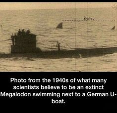 Megalodon 1940's, not real I'm sure... But still.....