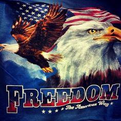 Patriotic, bald eagle