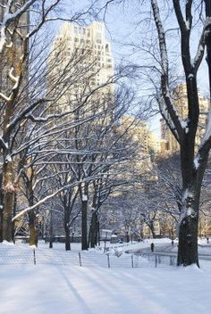 Winter Park View,  A view of Central Park and surrounding buildings after a fresh snowfall.
