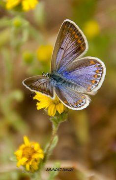 butterfly by Sadet Uslu