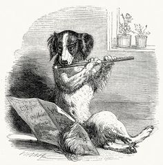 She went to the fruiterer's To buy him some fruit But when she came back He was playing the flute. From Mother Goose's nursery rhymes, published by George Routledge and Sons, London, New York,. Old Mother Hubbard, Retro, John Tenniel, Black N White Images, Vintage Comics, Nursery Rhymes, Beautiful Dogs, Illustration Art, Vintage Illustrations