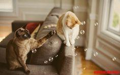 cats and bubbles - http://cutecatshq.com/cats/cats-and-bubbles/