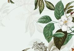 Vintage botanical frame design by rawpixel on Pink And White Background, Gold Glitter Background, Textured Background, Tropical Background, Watercolor Leaves, Watercolor Background, Floral Watercolor, Vector Background, Rose Frame