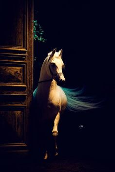 What a beautiful horse...