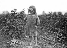 Lewis Hine - Laura Petty, a 6 year old berry picker on Jenkins farm, Rock Creek near Baltimore, Maryland, 1909