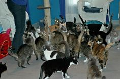 Funny silly cat, cats, kittens, crazy cats, The Patricia H. Ladew Foundation