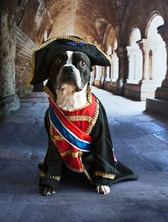 """Puppehs With A """"Napoleon Complex"""""""