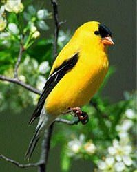 Bird seed & food - types of food & which birds it attracts