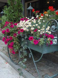 Flowers Outside Cafe, Zermatt, Switzerland Zermatt, Flower Cart, Flower Pots, Flower Planters, Flowers Garden, Beautiful Gardens, Beautiful Flowers, Window Box Flowers, Window Boxes