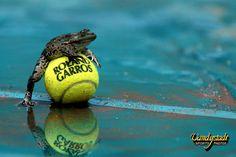 Le 11 juin 1995, la célèbre grenouille de Roland-Garros est photographiée un jour de finale pluvieux... Clic 2X pour les détails