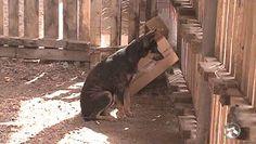 """""""O Grito do Bicho"""": Iniciativa retira animais das ruas em Caruaru - PE..."""