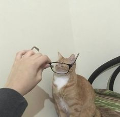 """leporell-o: """"hey does anybody want to see my collection of slightly distorted pictures of cats as viewed through glasses """" too late i've decided for you that you do here they are Animals And Pets, Baby Animals, Funny Animals, Cute Animals, I Love Cats, Cool Cats, Reaction Pictures, Funny Pictures, Animal Memes"""