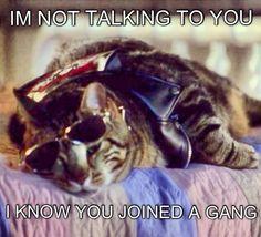 Oh lord tubbington. Lol #glee