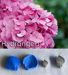 Hydrangea cutters and veiners, sugar flowers, gumpaste flowers, cutters, veiners,, Hydrangea, leaves Sugar Flowers, Gum Paste, Hydrangea, Blueberry, Leaves, Candy, Fruit, Crystals, Berry
