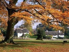 ~ autumn ~ thatched roof cottages ~ New Forest ~ Hampshire ~ England ~ Beautiful Landscape Pictures, Beautiful Landscapes, Beautiful Scenery, Beautiful Sites, Beautiful Architecture, Landscape Photos, Hampshire England, New England, Beautiful Places In England