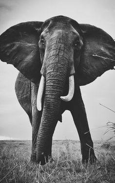 ♡ Elephants are my absolute favorite.