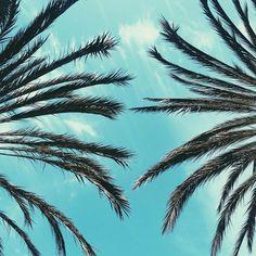 PLANT LIFE | VIGNETTES FROM JESSICA MARAK