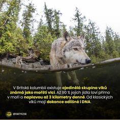 Husky, Instagram Posts, Dogs, Animals, Animales, Animaux, Pet Dogs, Doggies, Animal