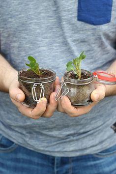 Pannenkoekplant #pilea stekken, tips! | Plantenfestijn