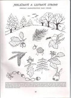 Bildergebnis für ovocné stromy