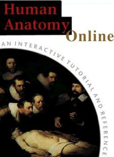 Human Anatomy: Online Dissector. Very helpful! Developed by Dr. Rarey and Dr. Malakhova